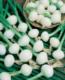petits oignons blancs