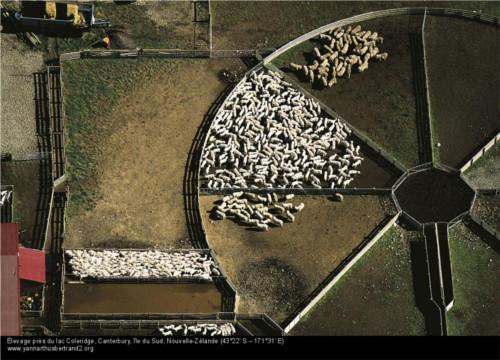 élevage de mouton nouvelle zélande