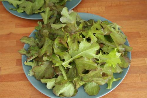 salade fraiche du jardin