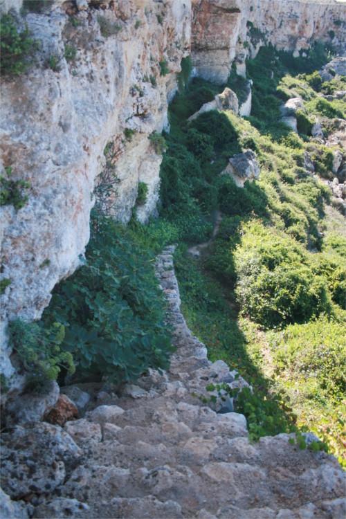 Escalier rempli de plantes