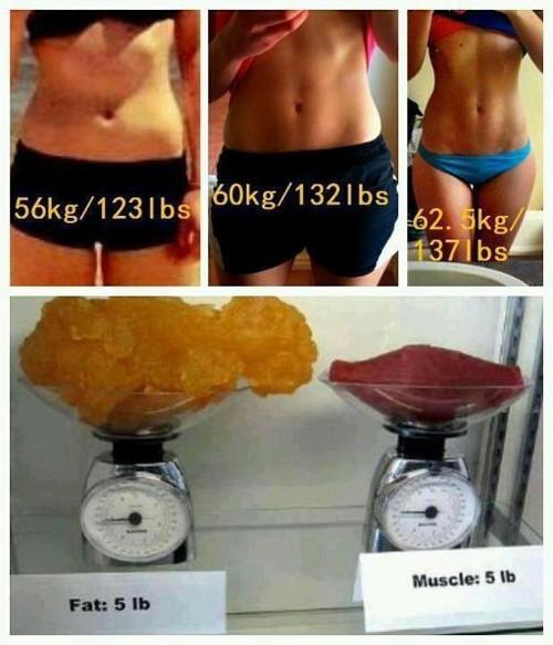 graisse contre muscles